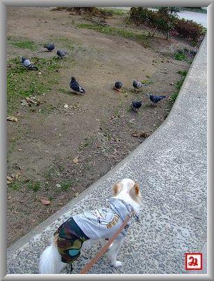 鳩さんだぁ